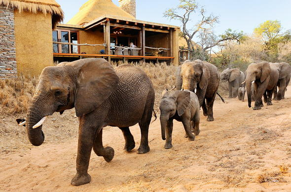 The Elephant herd in front of Camp Jabulani.