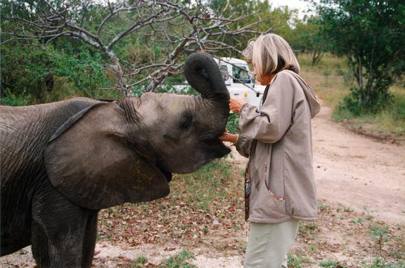 Feed an elephant at Camp Jabulani.
