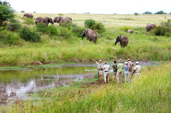 Guided walking safaris in Kapama Private Game Reserve.